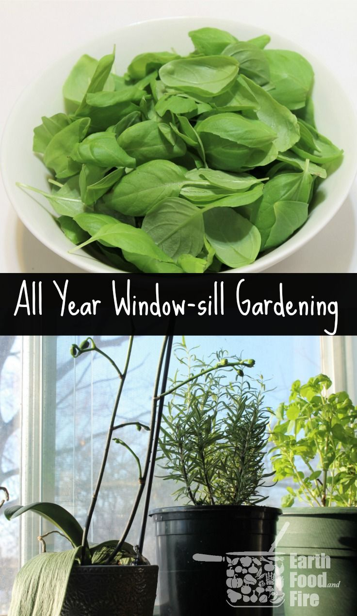 gardening tips for growing year round herbs herbs indoors