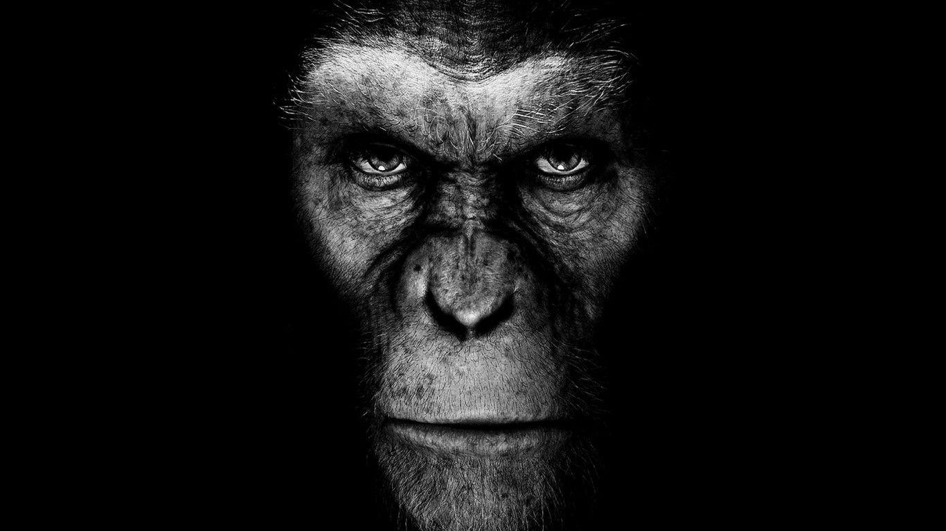 Monkey Computer Wallpapers Desktop Backgrounds X Id In 2019