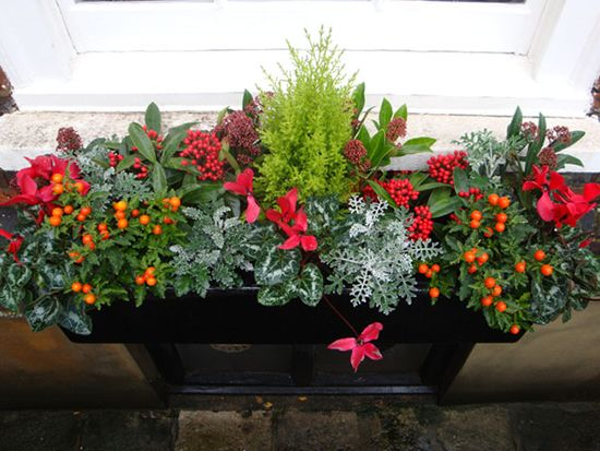 Winter Window Boxes | Planters, Window boxes and Home