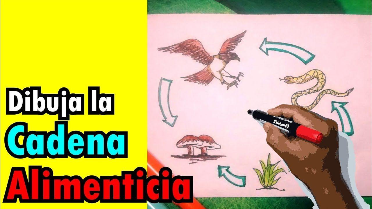 Como Dibujar Paso A Paso La Cadena Alimenticia Con Colores Dibujo Paso A Paso Como Dibujar Dibujos De Marshmello