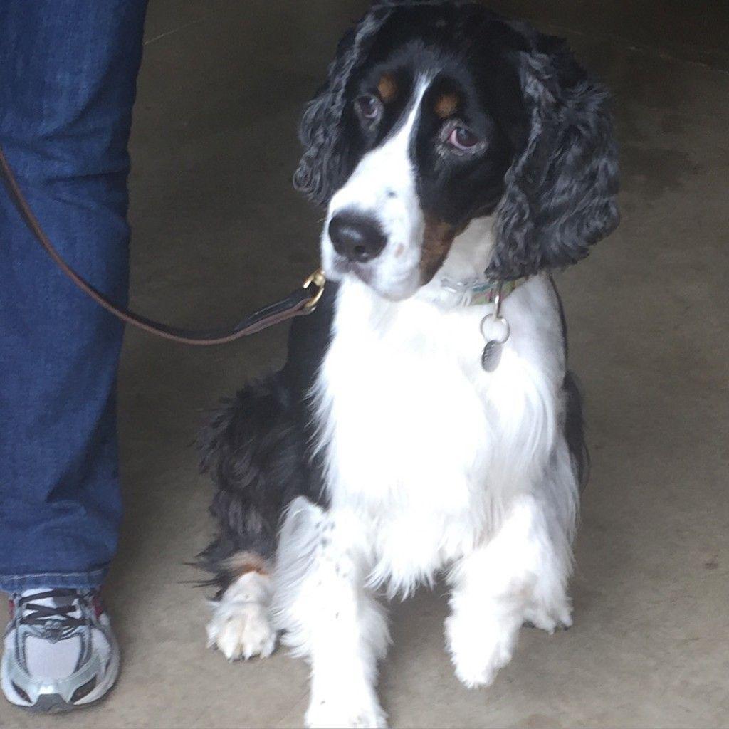 Interesting Fresno-area dog news. Service dogs, police canines, Fresno dog training, dog rescue and more.