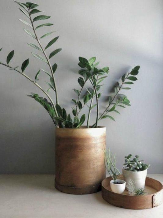 Houten bloempot voor binnen bloempotten voor binnen for Grote planten voor binnen