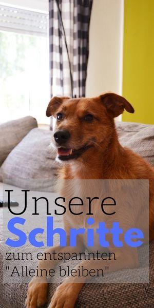 Unsere Schritte Zum Entspannten Allein Bleiben Hunde Hundchen Ubung Und Hundchen Training