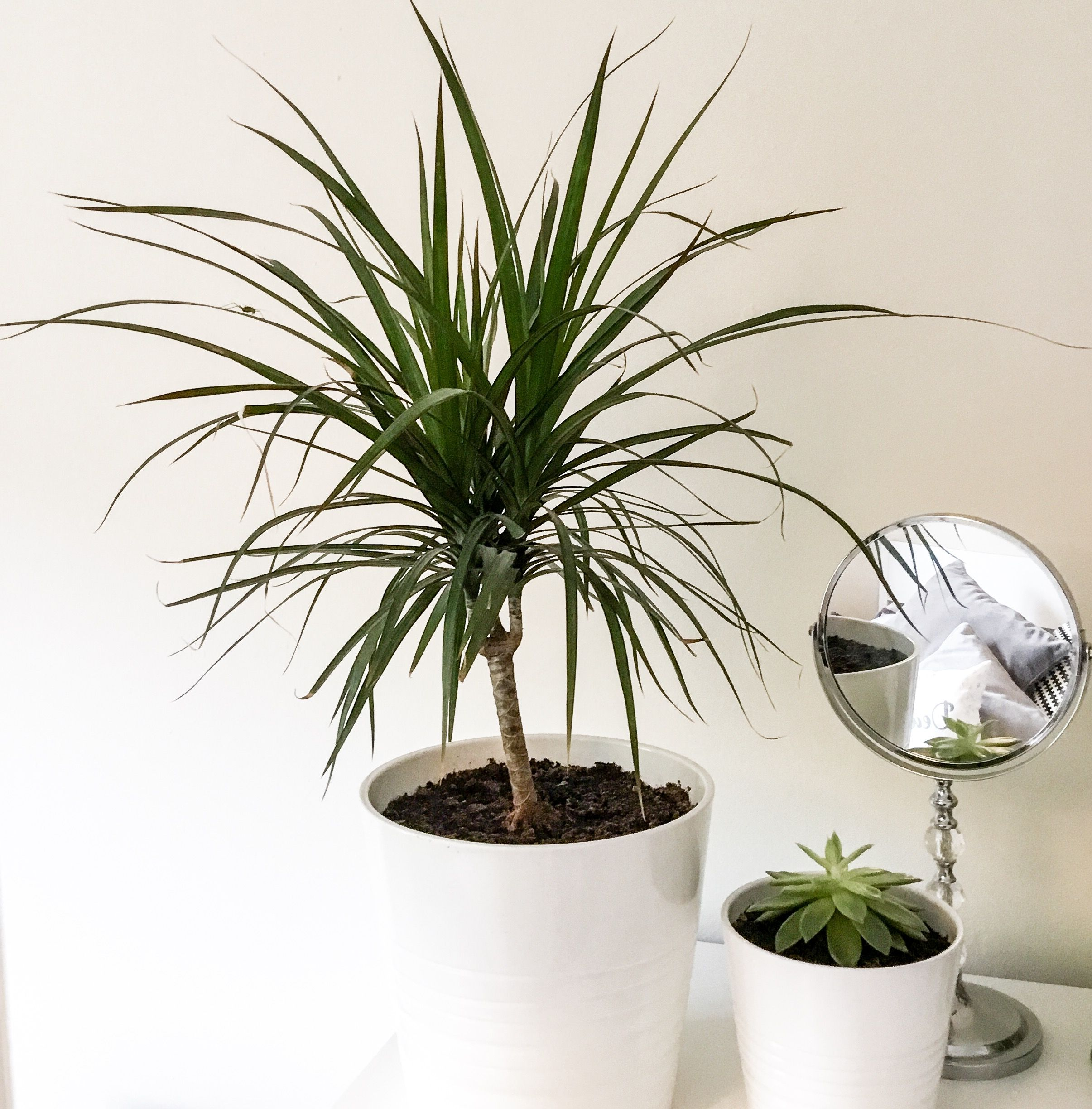 There are so many great benefits of having house plants