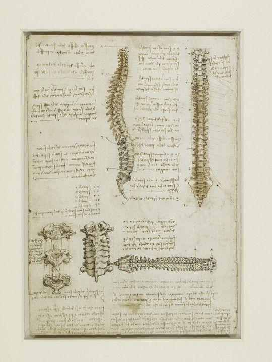 The vertebral column <3k<3
