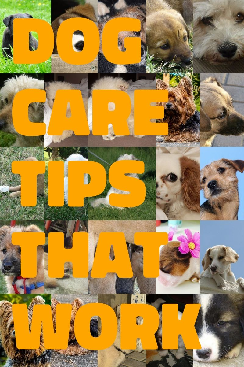 Awesome Dog Training Tips That Anyone Can Use Dog Training Tips