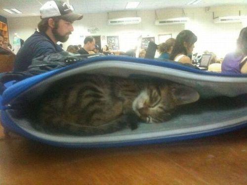 Im not LAZY, Im a CAT