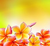 Bright Flower Border Stock Photos – 17,922 Bright Flower Border Stock Images, Stock Photography & Pictures - Dreamstime - Page 12