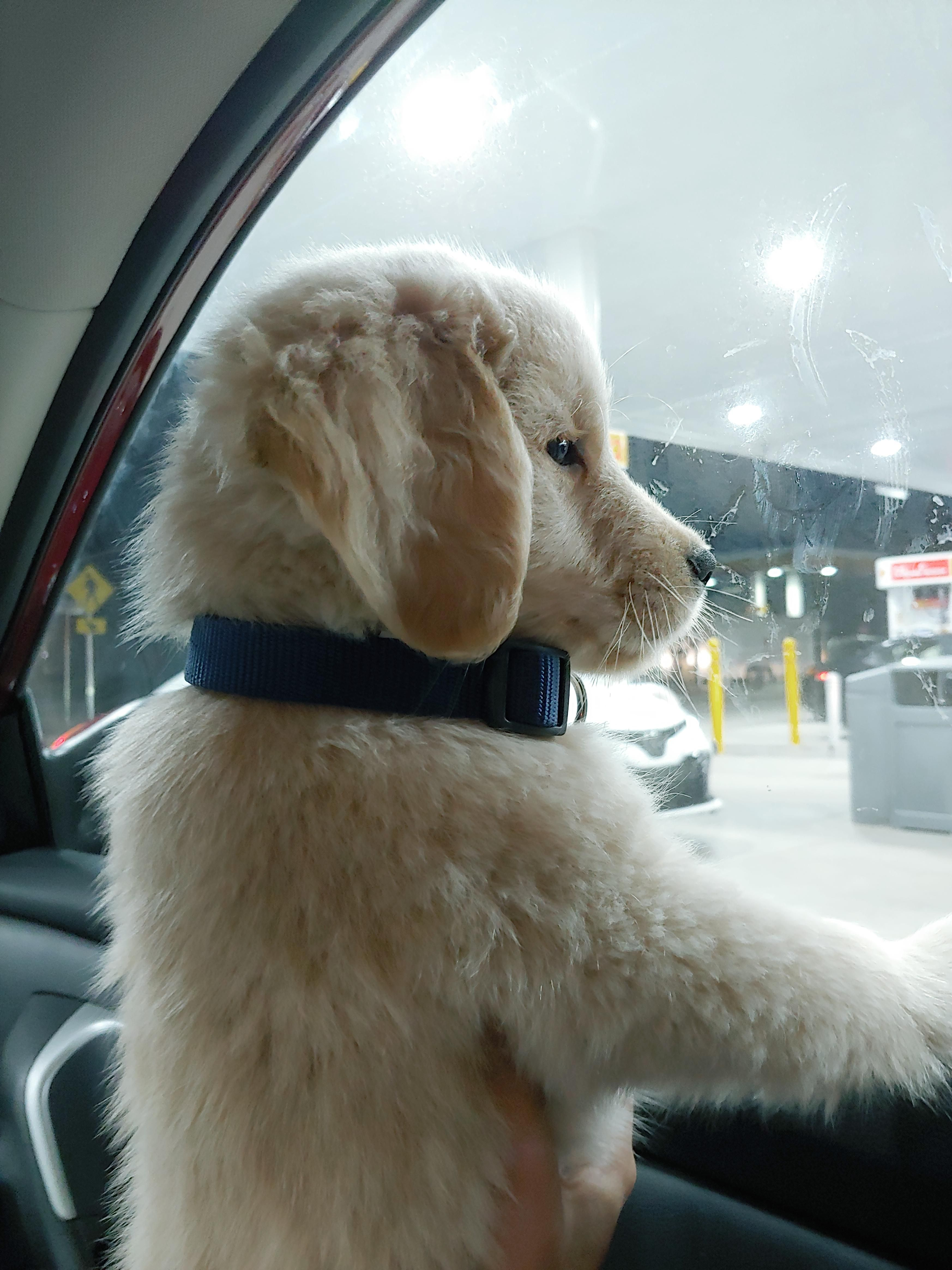 Photo of 🐶🐶🐶 47+ Adorable Golden Retriever Mix Breeds ❤️❤️❤️   Doggypedia