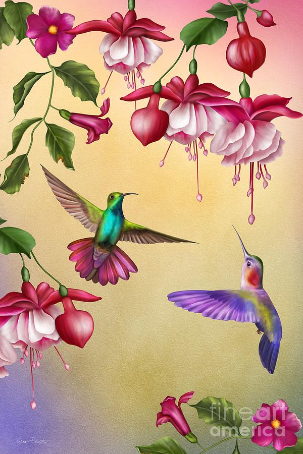 Humming Birds And Fuchsia Jp2784 Painting By Jean Plout Hummingbird Art Bird Art Hummingbird Painting