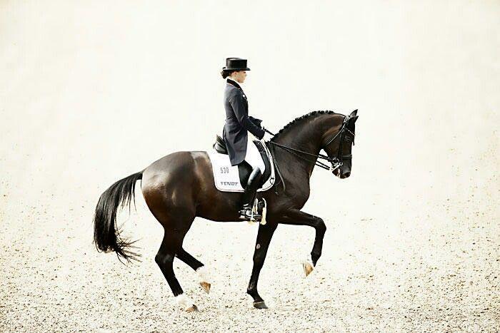Kristina Sprehe Desperados Frh Dressage Horses Horse Dressage Horse Art Ideas