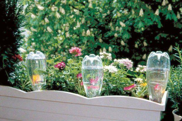Rosliny Na Slonecznym Balkonie Watering Globe Plants Watering