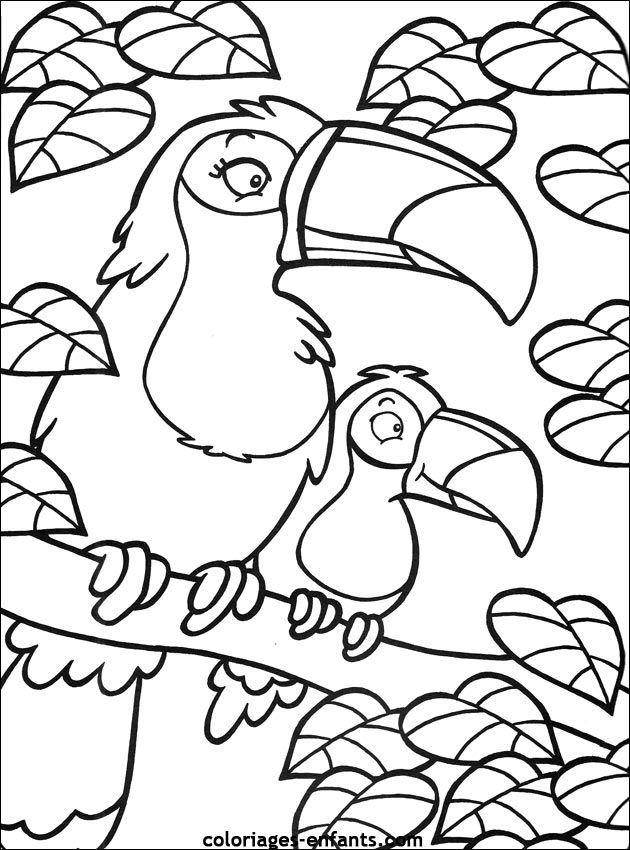 Coloriage de perroquet sur coloriages dessins pinterest coloriage enfant - Dessin perroquet facile ...