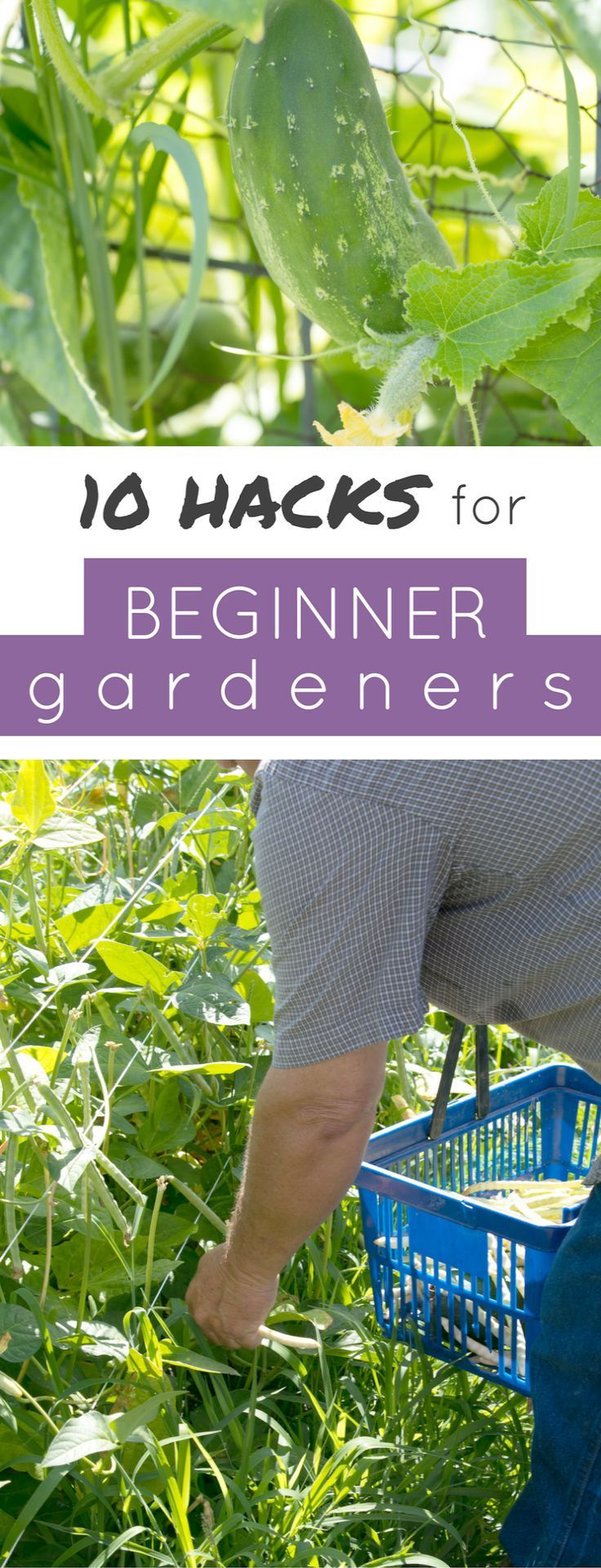 Gardening Tools Perth like Best Vegetable Gardening Books ...