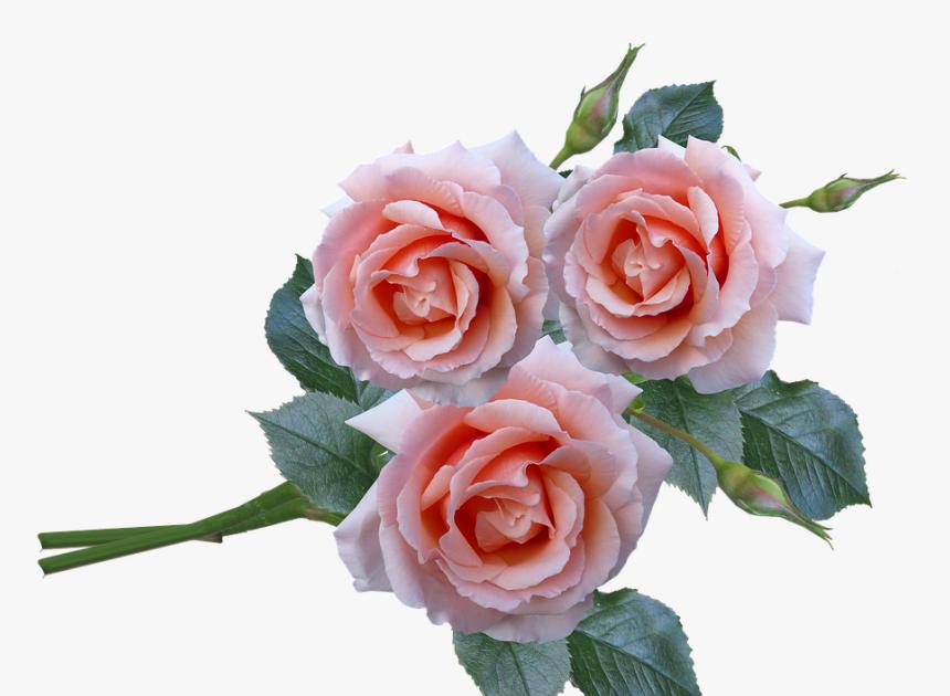 Terpopuler 30 Gambar Dan Foto Bunga Mawar Roses Bunch Stem Flowers Garden Setangkai Bunga Mawar Download Dibalik Keindahann Bunga Gambar Bunga Menanam Bunga