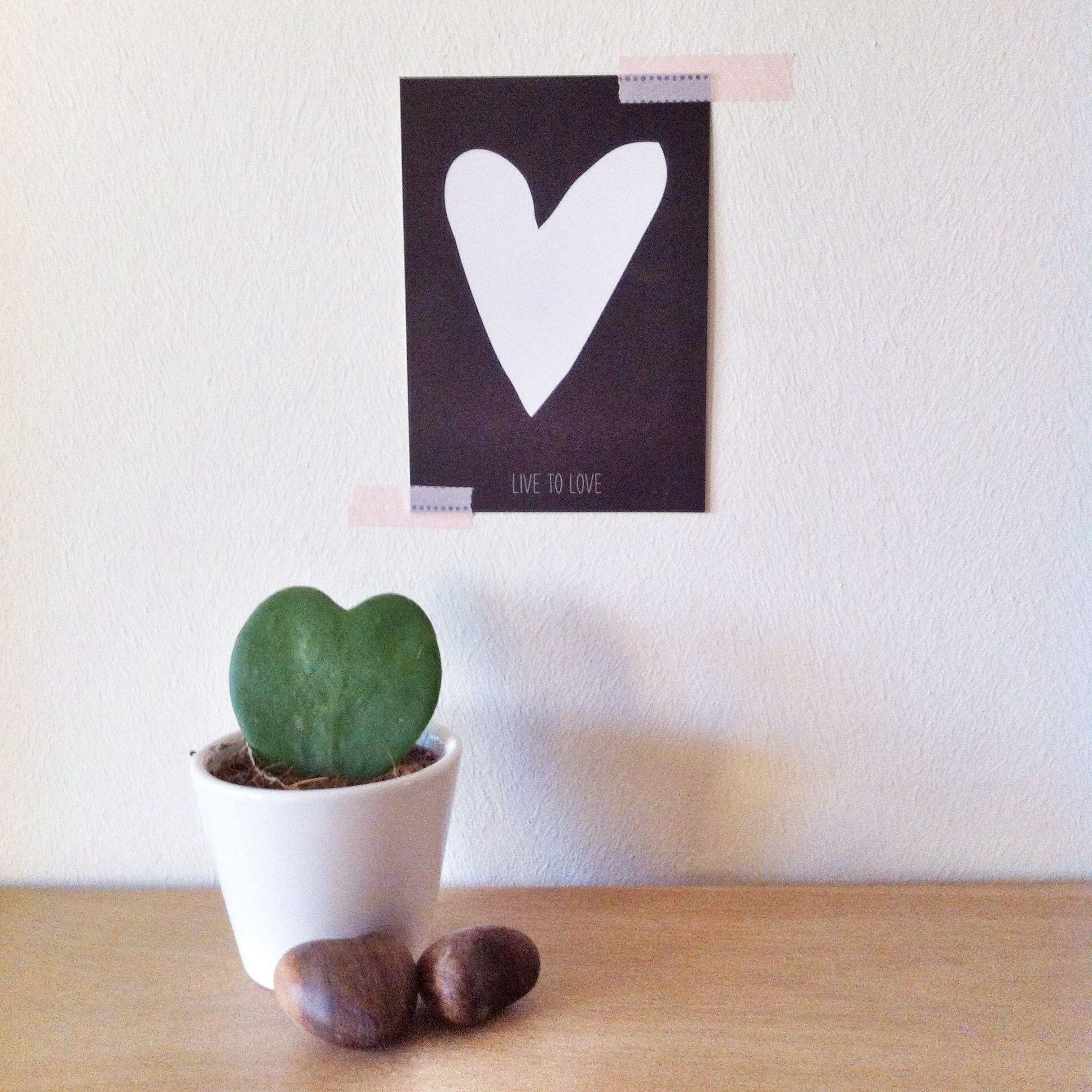 Cactus love | Wedding favors - Plant Favors- Plante marturii nunta ...