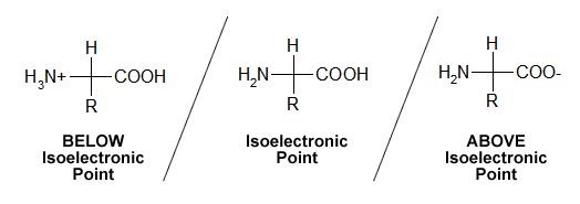 Ponto+isoeletrico2.png (524×185)