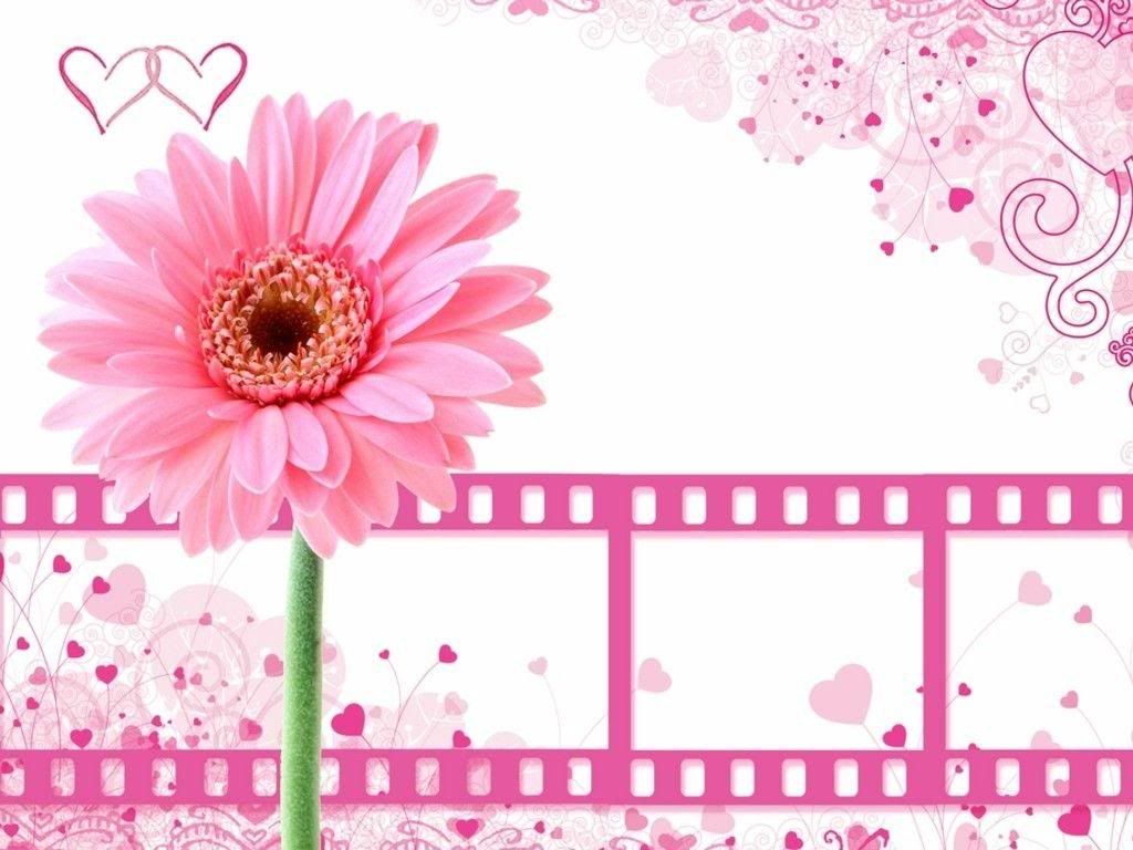 Pink Flowers Backgrounds Wallpaper 16001000 Background Images