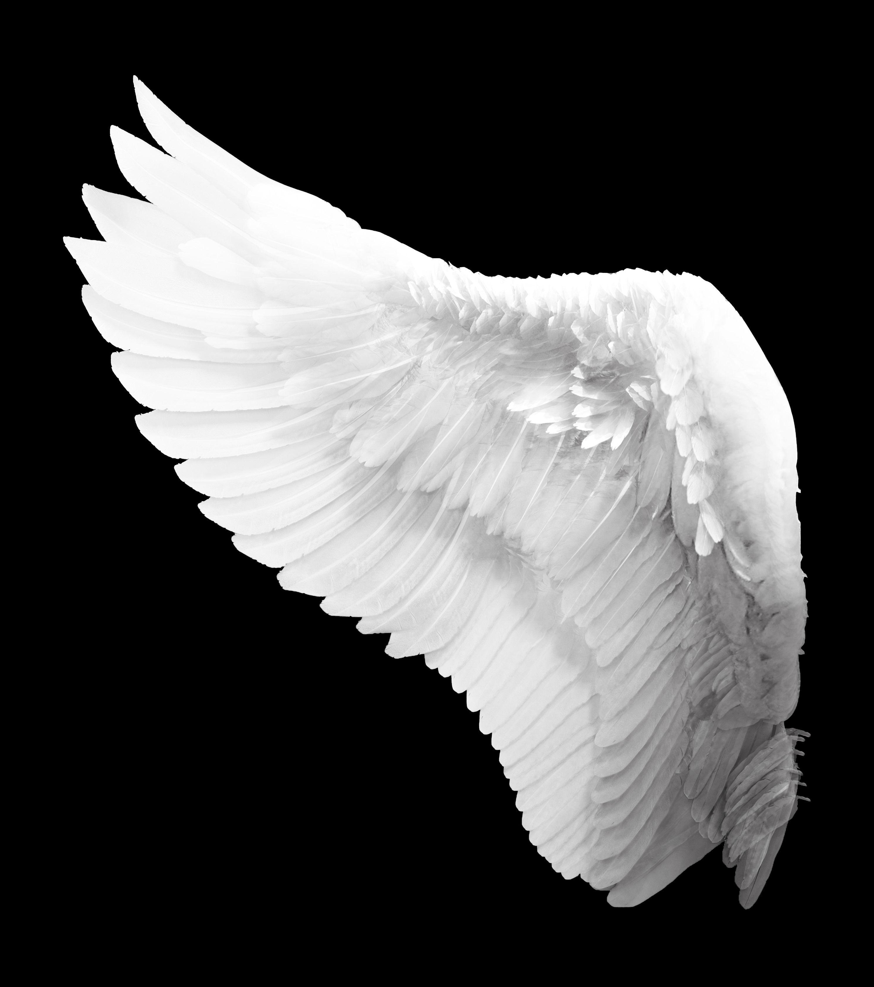 крылья ангела картинка в хорошем качестве между высокогорьем морем