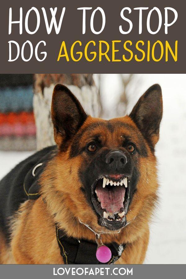 Dog Behavior Aggressive Behavior Aggressive Hundeverhalten