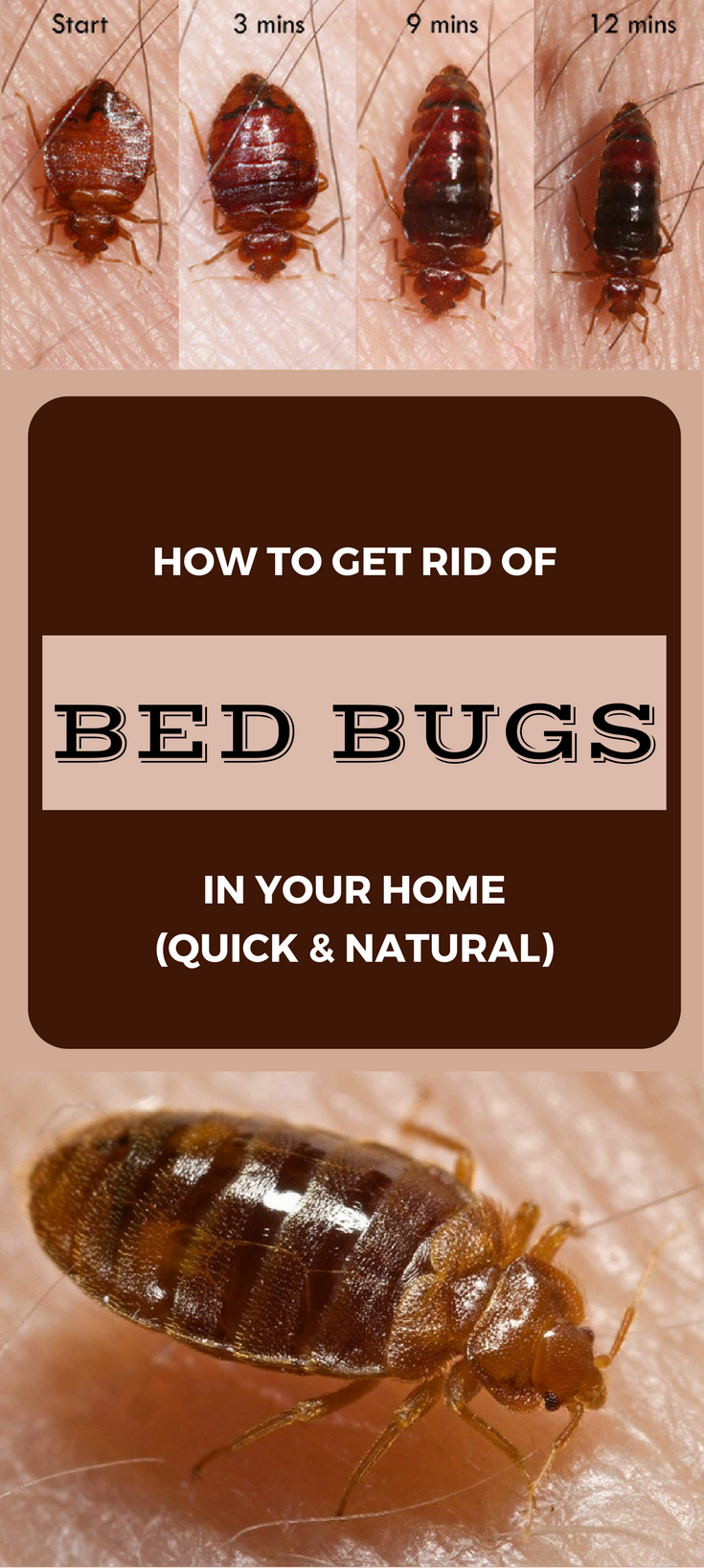 How to Get rid of Bed Bugs in Your Home (Quick and Natural