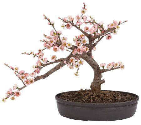Cherry Blossom Bonsai Tree By Nearly Natural Qvc Com Cherry Blossom Bonsai Tree Artificial Cherry Blossom Tree Indoor Bonsai Tree