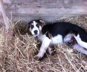 Spot Is An Adoptable Australian Cattle Dog Blue Heeler Dog In