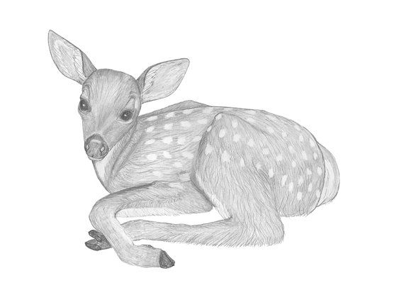 Baby deer print of original pencil drawing by scubamousestudiosjr 12 00
