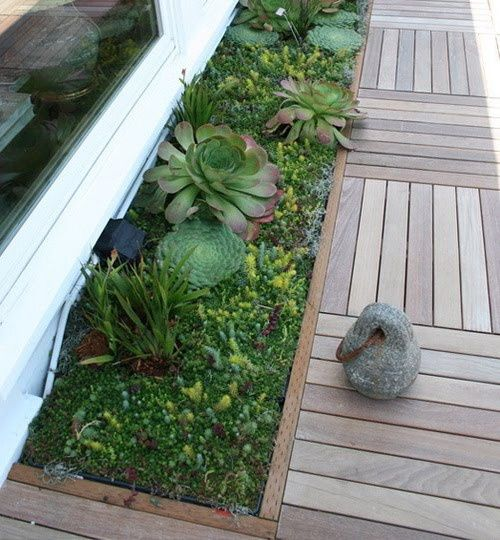 Phenomenal Succulents Along A Wooden Path Or Is It A Planter Box Caraccident5 Cool Chair Designs And Ideas Caraccident5Info
