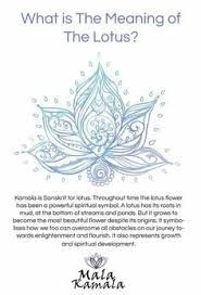 Image Result For Unalome Lotus Flower Meaning Tattoos Tattoos
