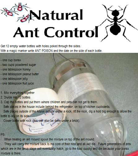 Natural Ant Bait One Cup Borax Two Cups Powdered Sugar One Tablespoon Honey One Tablespoon Peanut Butter One Tablespoon Jell Ants Borax Fruit Juice