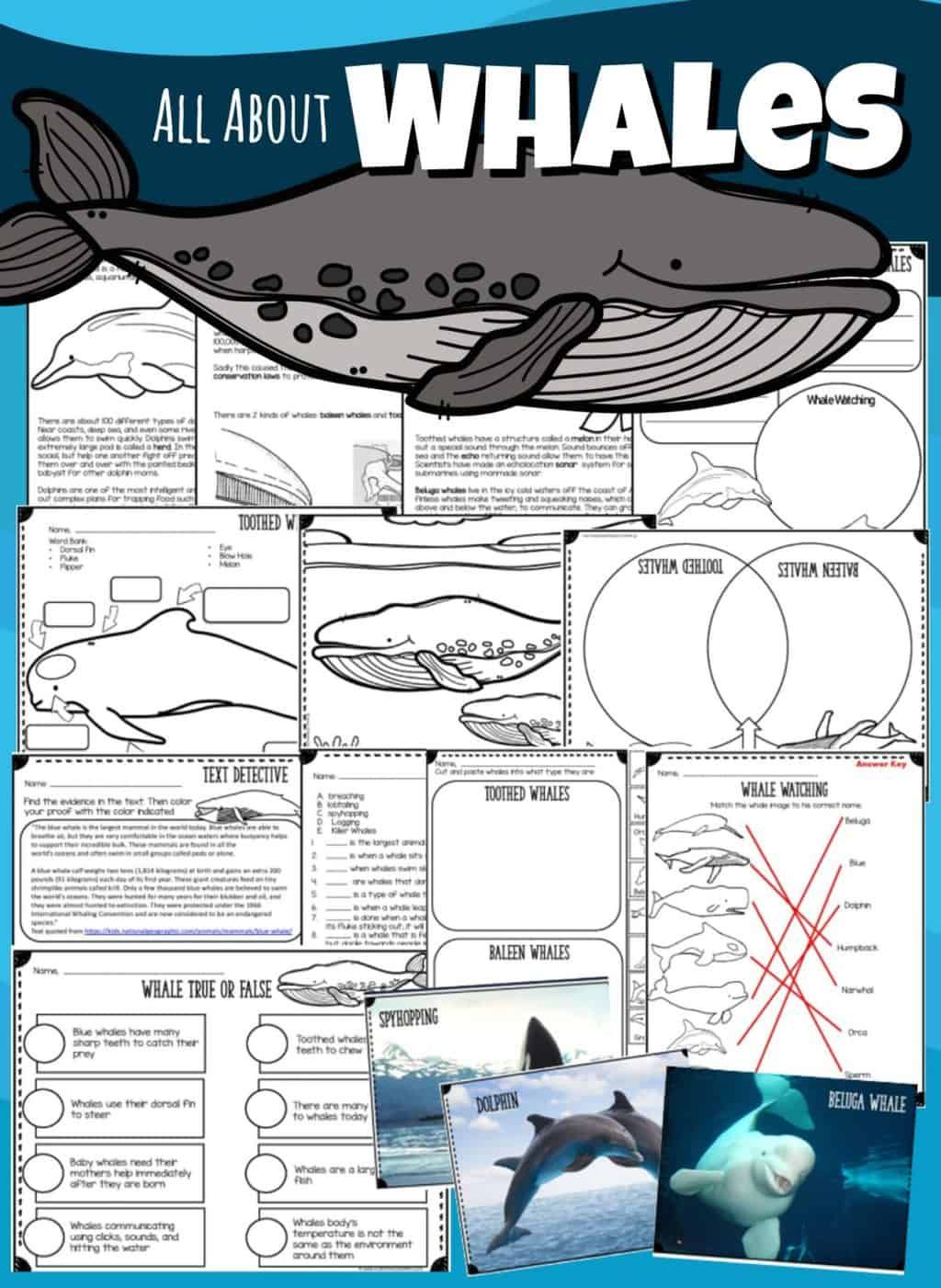 All About Whales Lesson In