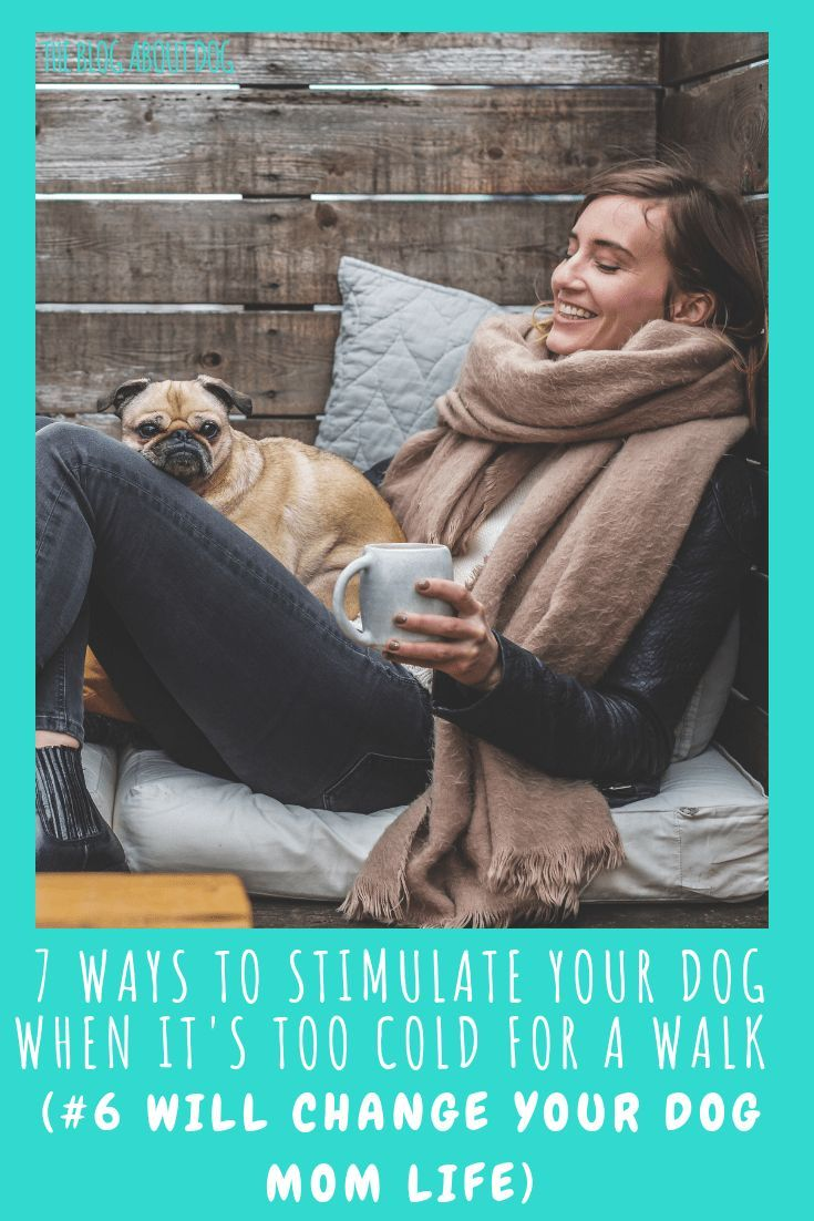 7 Ways to Stimulate Your Dog When It's too Cold For a Walk