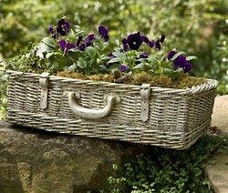 beautiful planted basket
