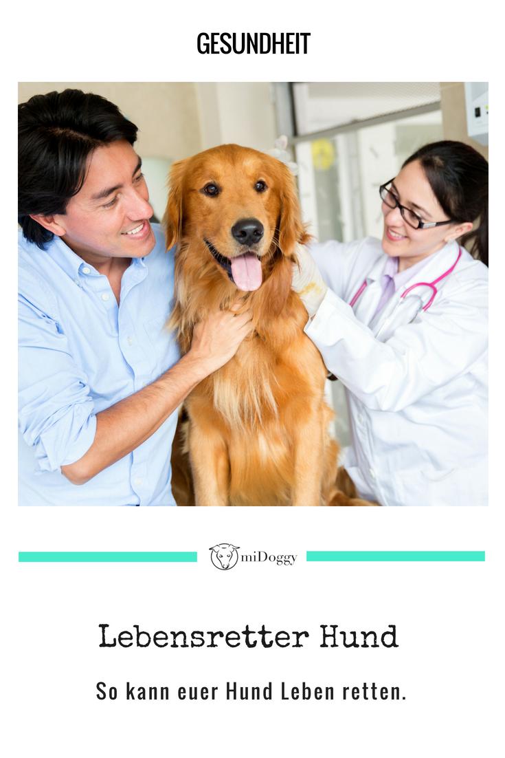 Blutspende bei Hunden - Auch Hunde können Leben retten ...