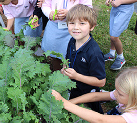Rosarian Academy's Gardens Promote Stewardship of the