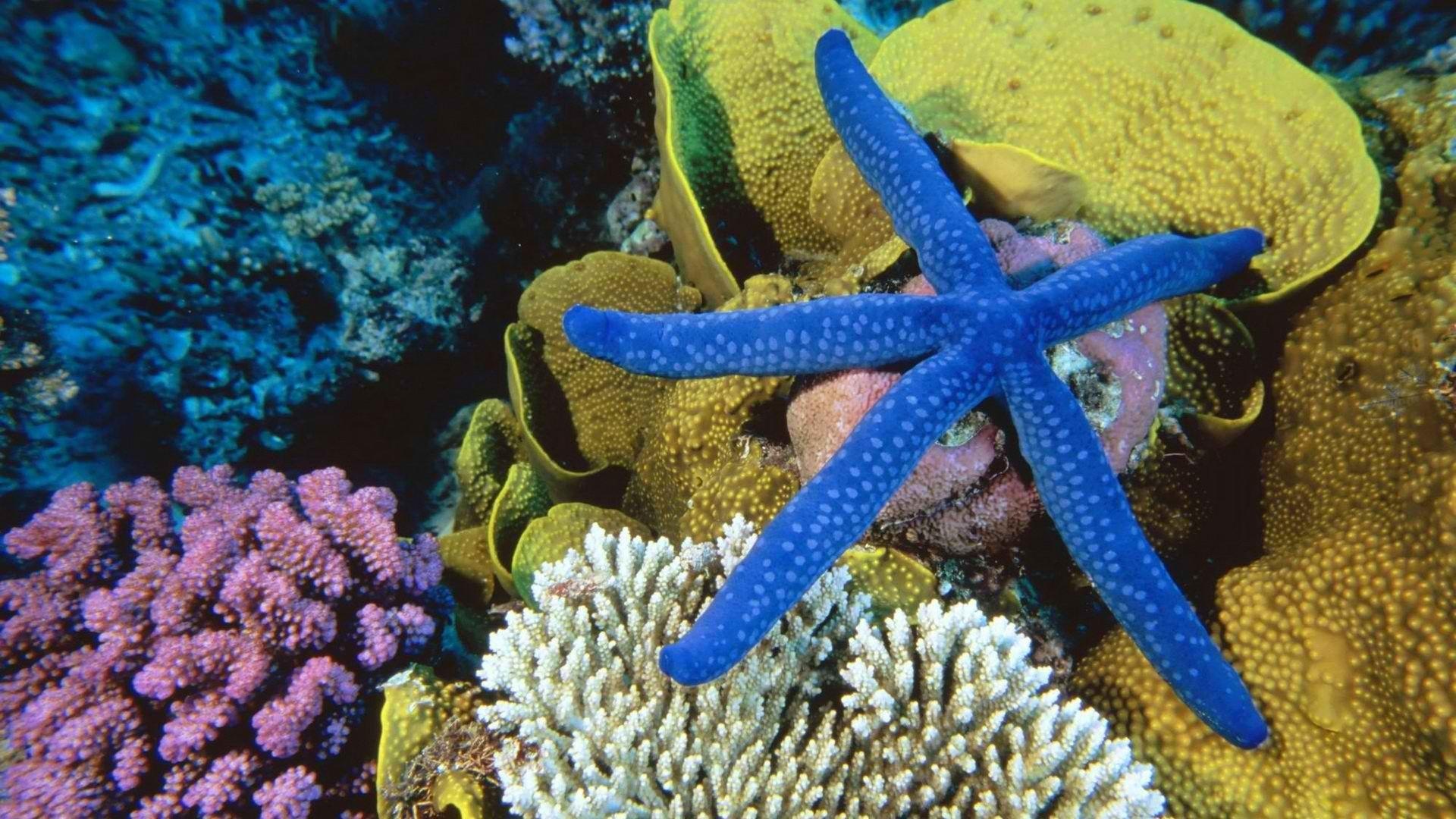 Blue Star Fish Sea Creatures Beautiful Fish Sea Animals