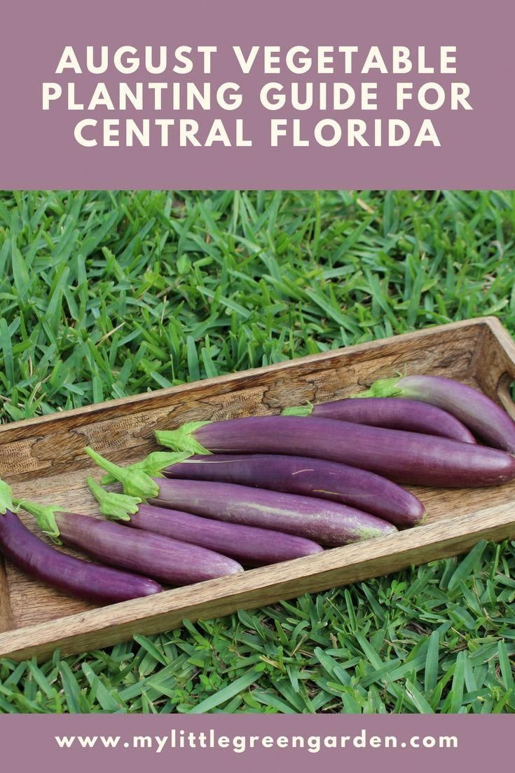 August Vegetable Planting Guide For Central Florida Learn 400 x 300