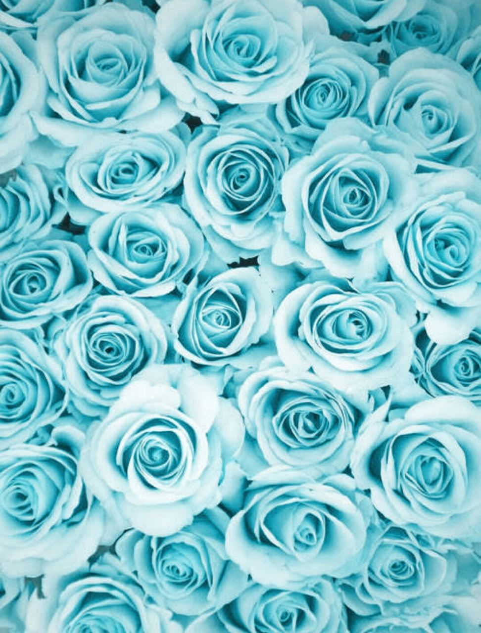 image result for blue roses background blue aesthetic