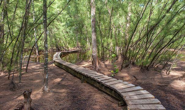 Oleta River State Park Trail Oleta River State Park 6