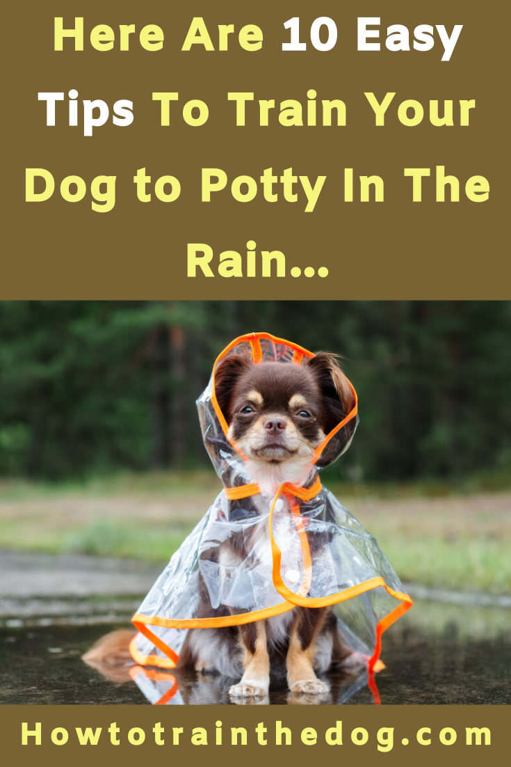 How To Get Your Dog To Potty In The Rain 10 Tips Your Dog Dogs Dog Potty