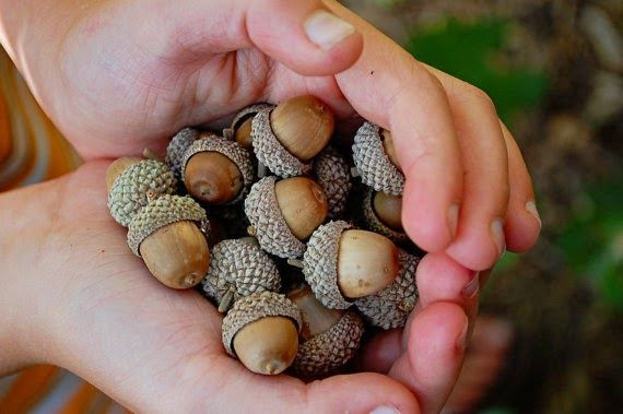 Toad's Treasures: Fall Decor = Acorns & Easy DIY Projects