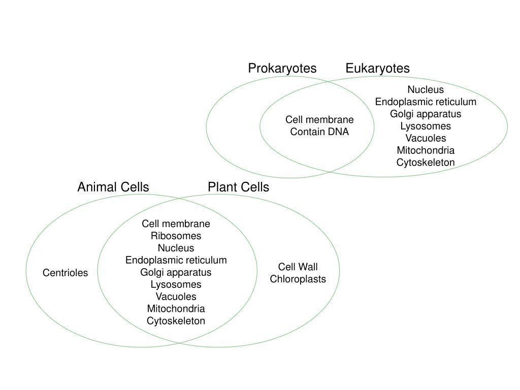 Prokaryote Vs Eukaryote Worksheet Prokaryotic Cells Vs ...