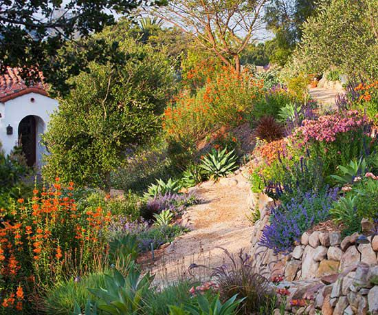 Tips for taming a slope salvia agaves and planting for Garden design bible