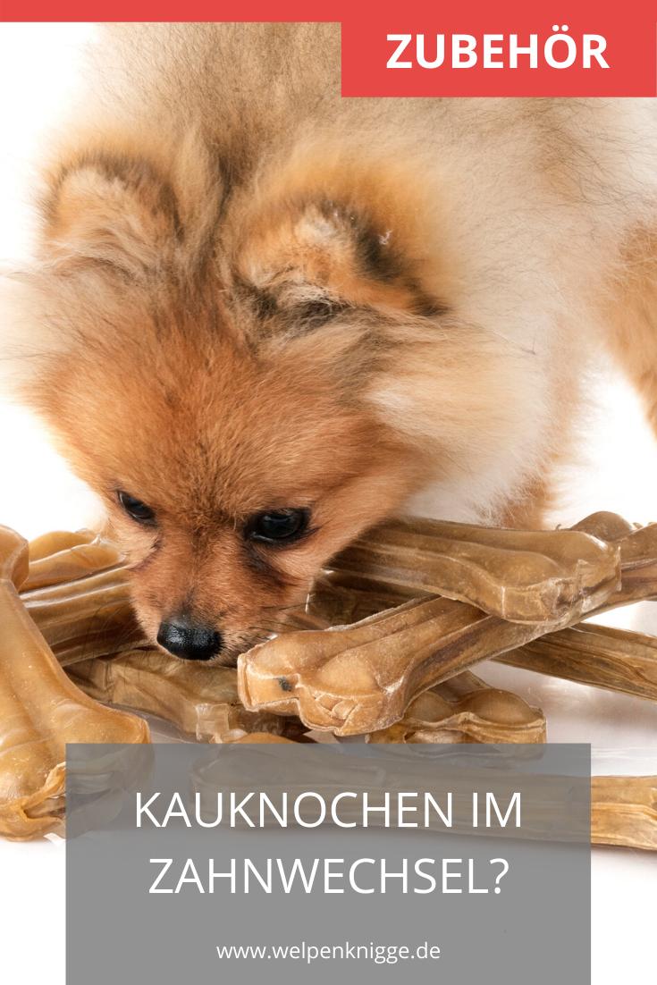 Kauknochen Fur Welpen Worauf Gilt Es Zu Achten Kauknochen Gesunde Hunde Welpen