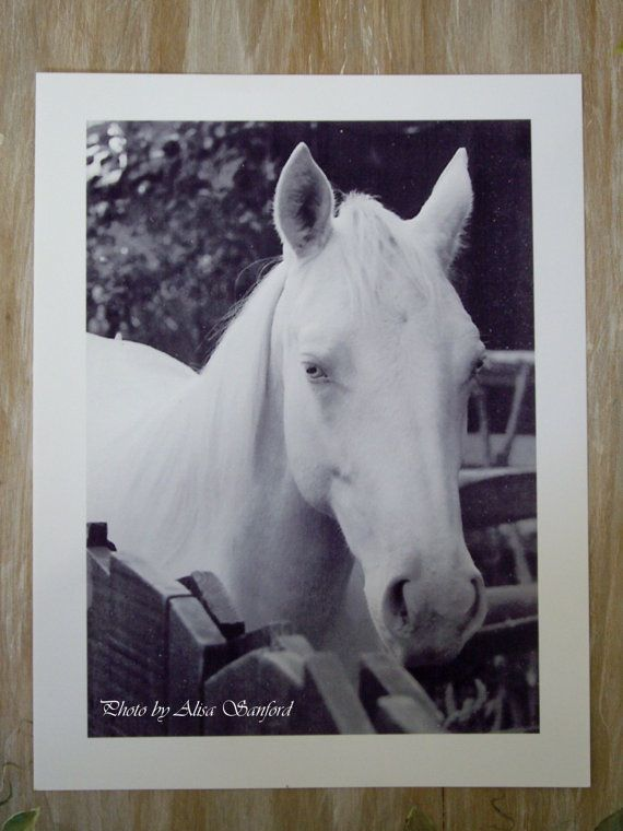 Photo of Beautiful Albino Horse for sale at Keepsake Galleria on Etsy.com