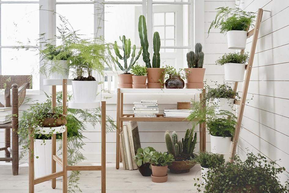 Moderne Zimmerpflanzen zimmerpflanzen in szene setzen indoor greenhouse gardening
