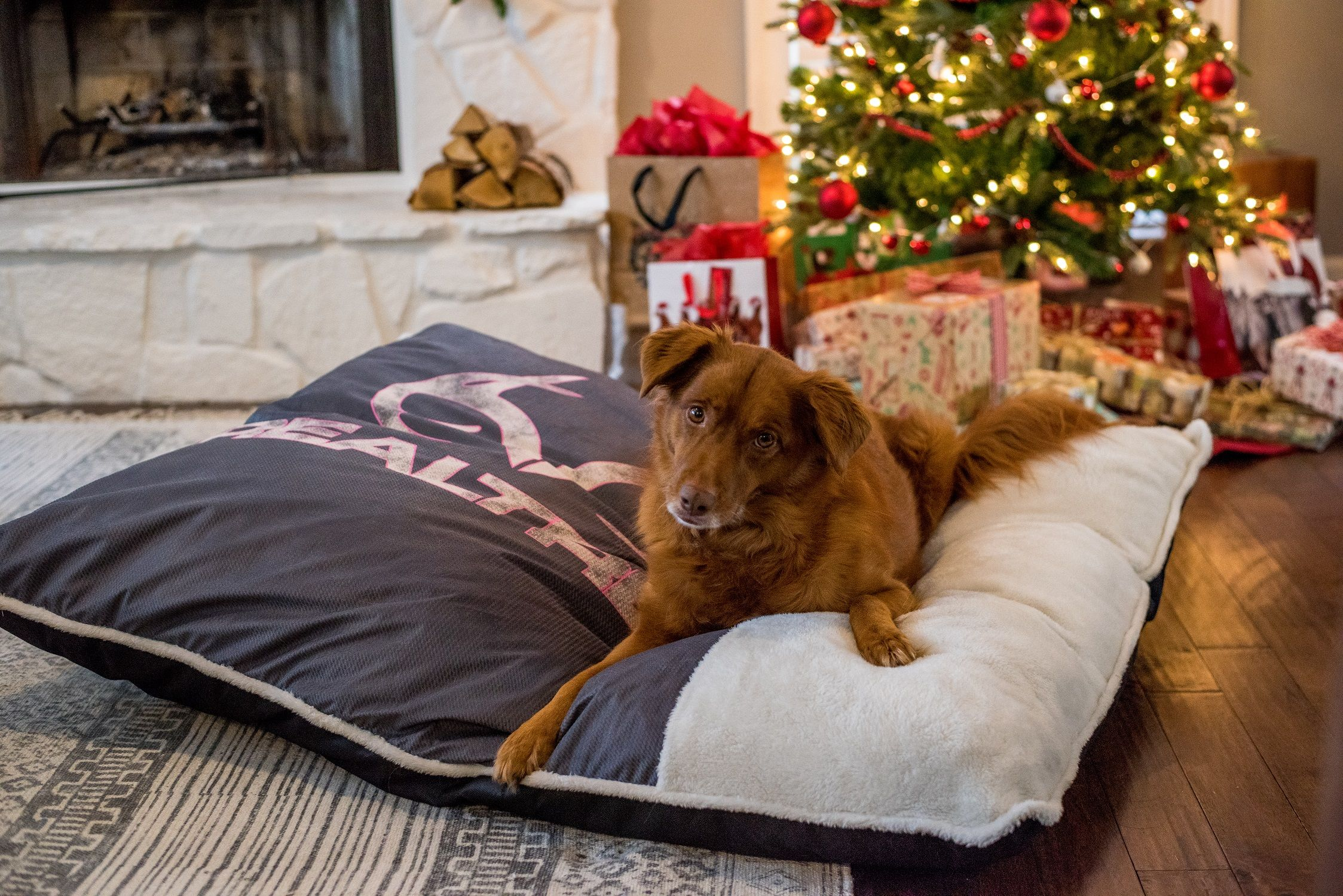 Large Realtree dog beds    tons of colors and patterns   Dog bed ...
