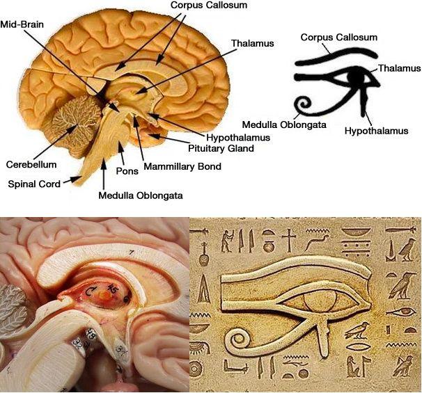 Olho de Horus Pineal - To no Cosmos