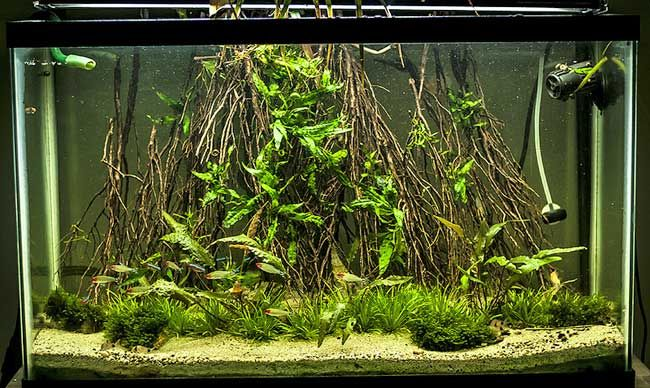 Angel Forest Aquascape